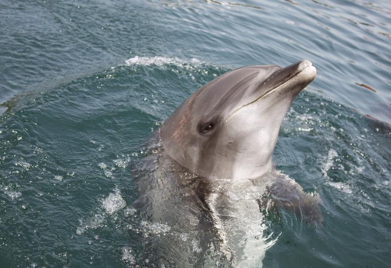 イルカの画像 p1_23